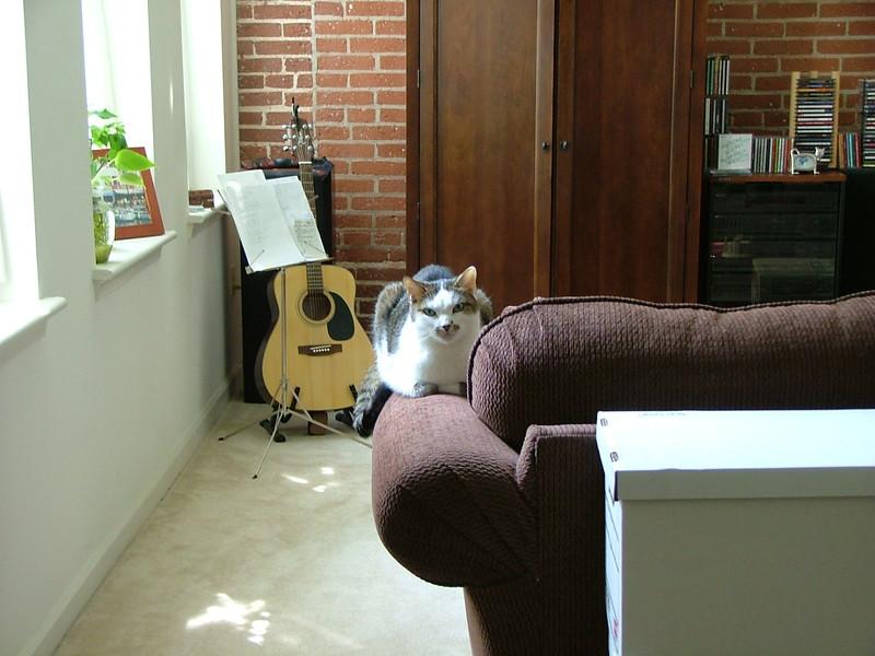 Window, guitar, cat