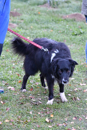 Cours Fitness Canin Proprioception - Groupe 3 - 13102018
