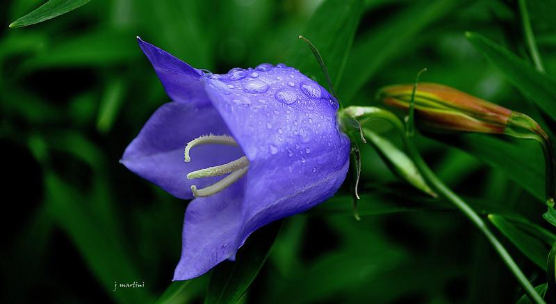 blue bell 2-2-2011.jpg