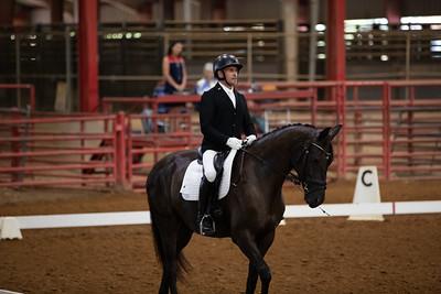Horse 457