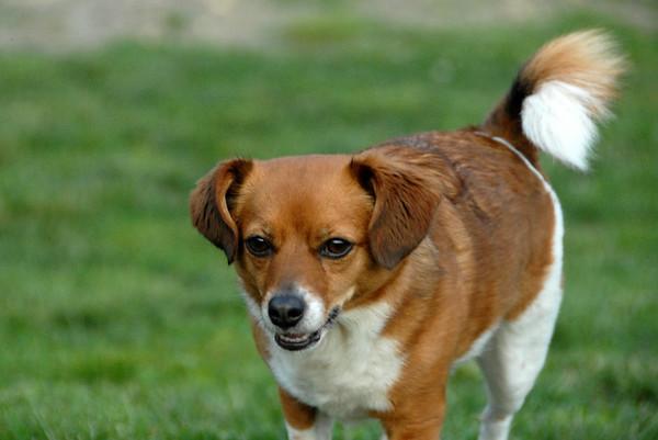2010-06-12 Denville Dog Park