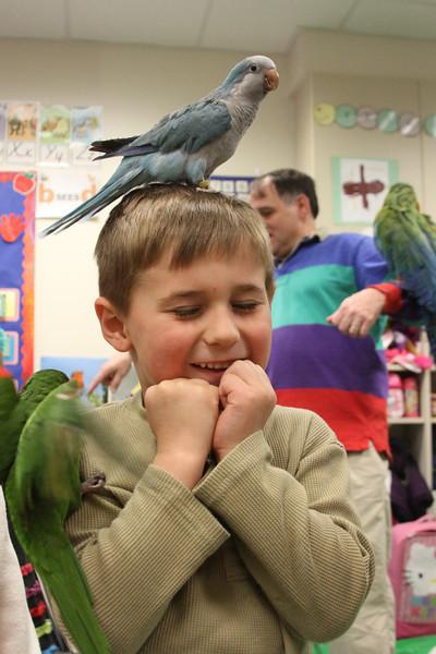 JK Parrots of Paradise
