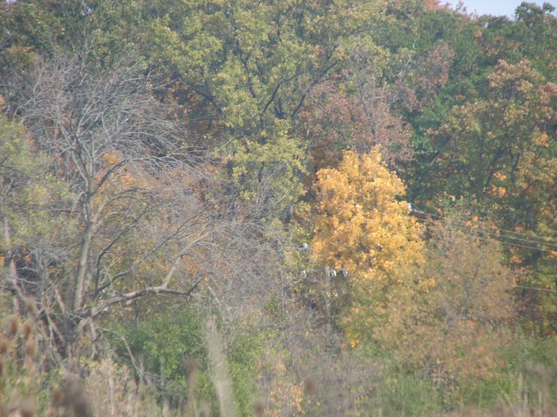 Fall pics 2008 016.jpg