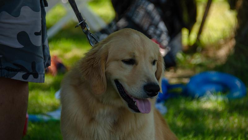 PuppyParty18-357.jpg