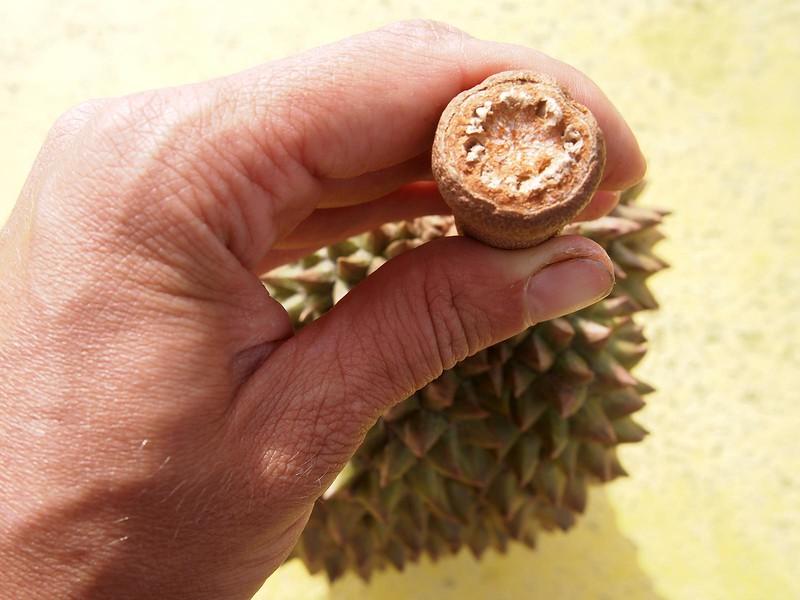 Fresh-Durian-in-Oahu.jpg