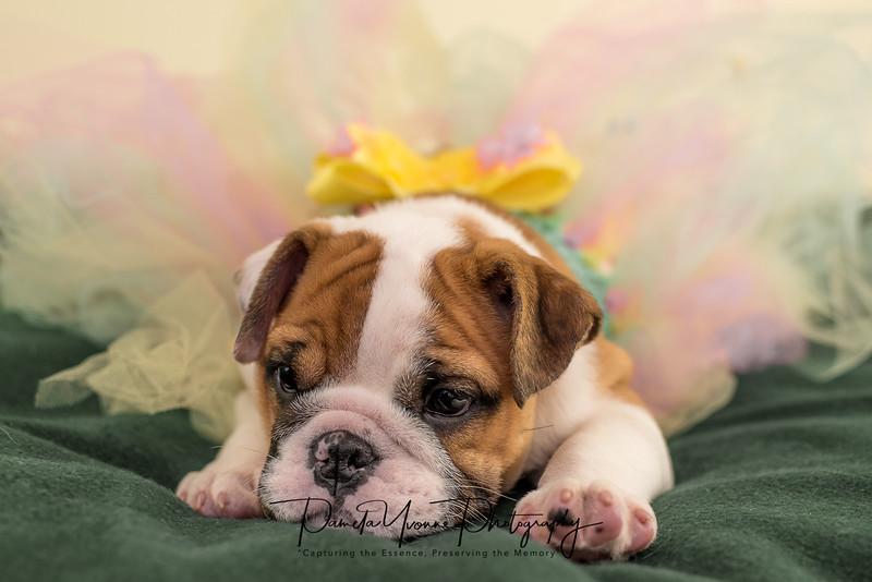 Michelle's newest puppy-5515.JPG