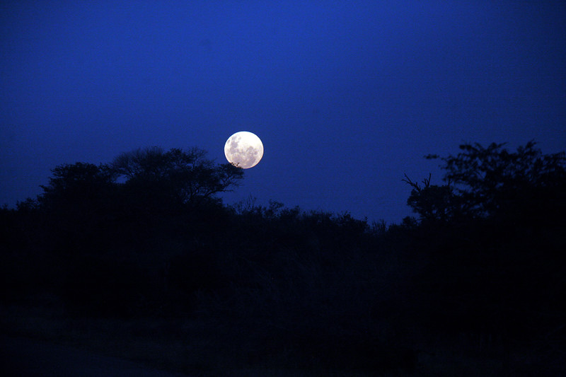The full moon rises at Kruger National Park, South Africa.