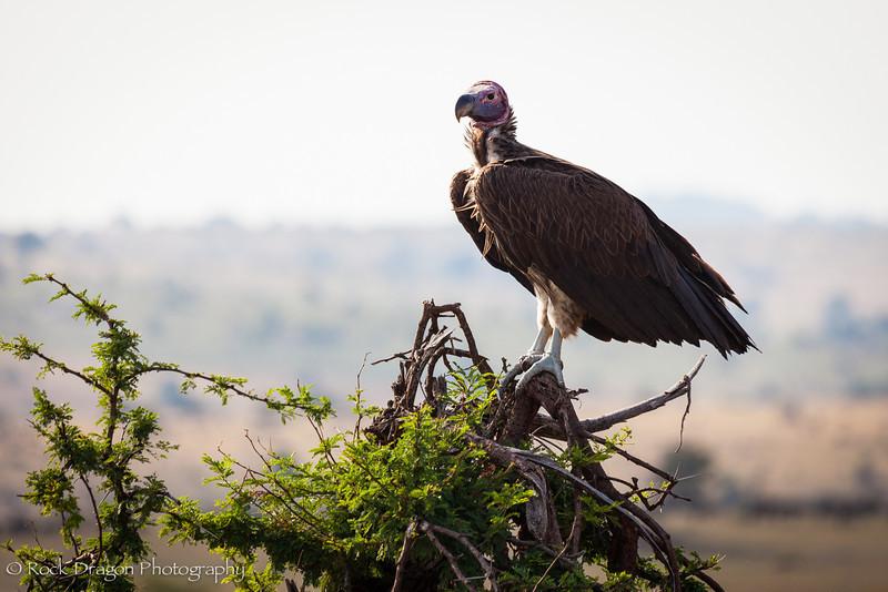 South_Serengeti-64.jpg