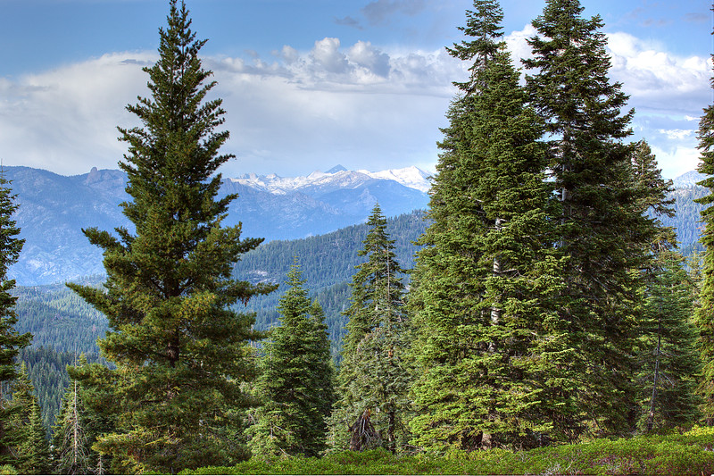 Sequoia-8-1.jpg
