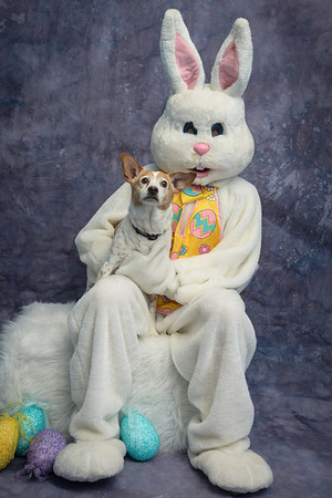 Super Dogs & Cats Bunny Photos 2014