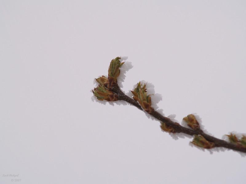 wyoming bird High Plains Spring