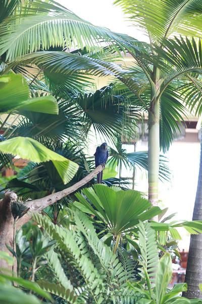 Kauai_D5_AM 228.jpg