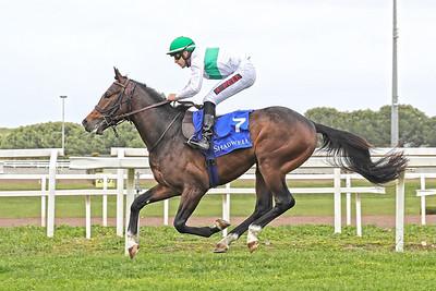 3 Premio Shadwell Arabian Stallions 1500m