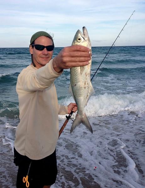 May bluefish 1 of 4