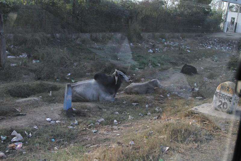 India_2012Feb-6354.jpg