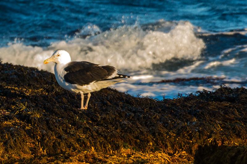 19-Sept North America Birds-1302.JPG