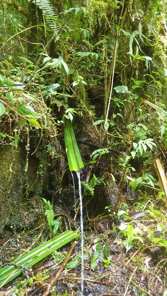 Papua jungle water tap.