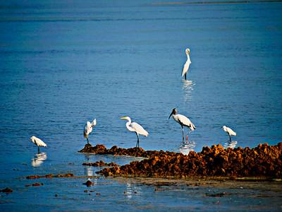 Birds/Animals