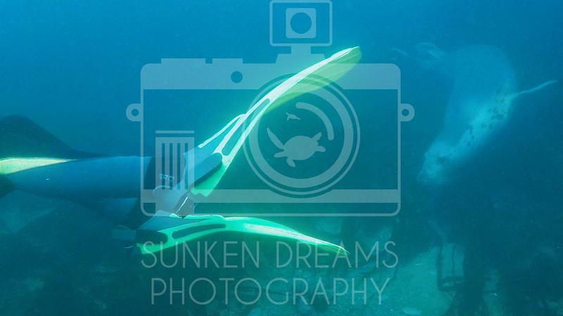 Lundy Island Edit.Still063.jpg