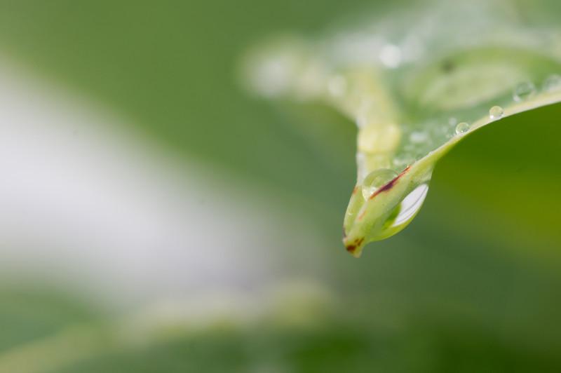 dew drop in razor sharp focus