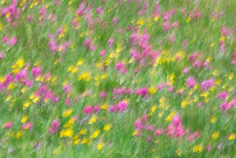Wildflower Impressions