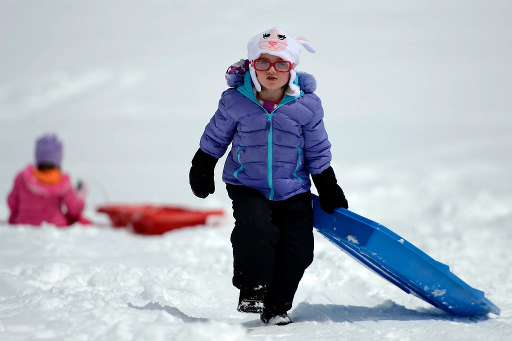 . BOULDER, CO. - APRIL 23: 4 year old Erin Doyle heading up the hill for another run as she sleds with her twin sister Megan, in pink, at Scott Carpenter Park April 23, 2013 Boulder, Colorado. (Photo By Joe Amon/The Denver Post)