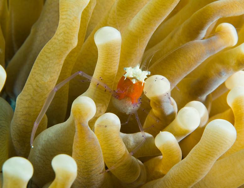 crab orange (1).jpg