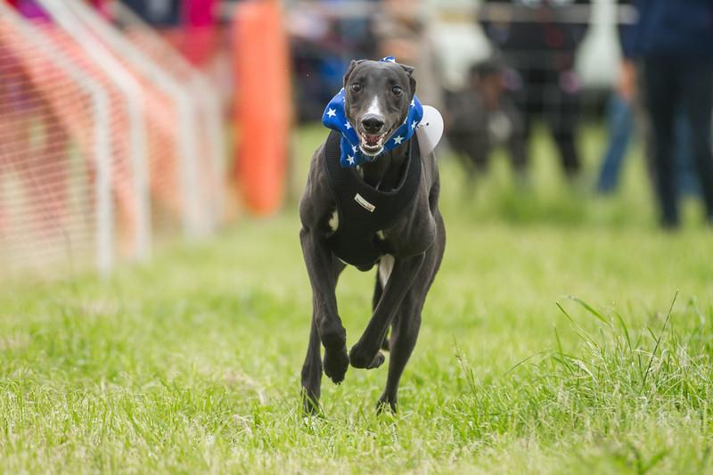 Doggy Dash EGLR Fun Day 2014