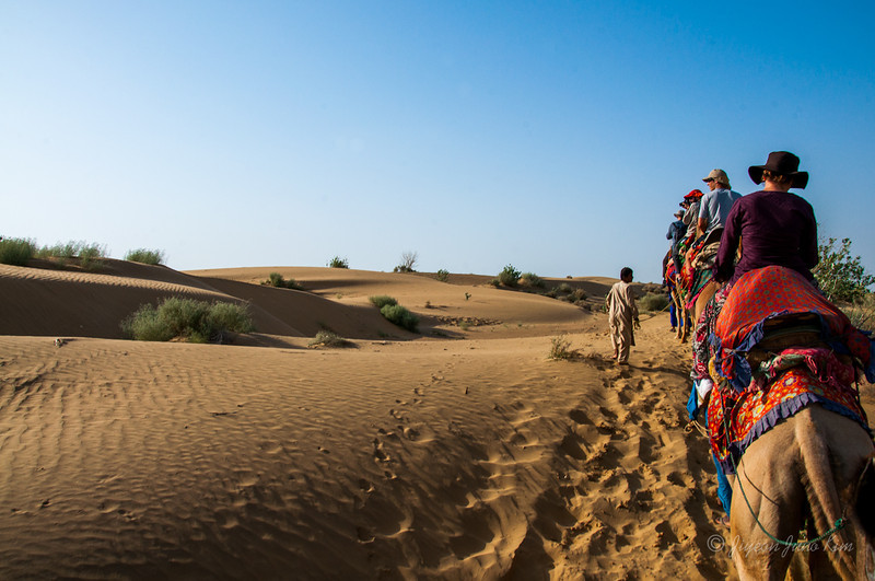 India-Rajasthan-Camel-9955.jpg
