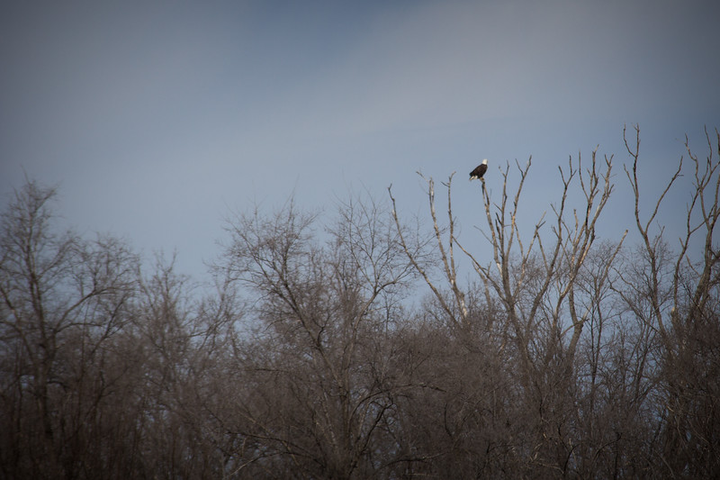 Eagle tree distance-7218.jpg