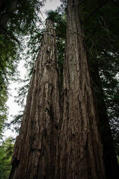 Redwood-19.jpg