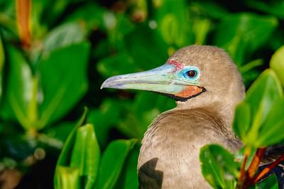 15 Genovese Birds