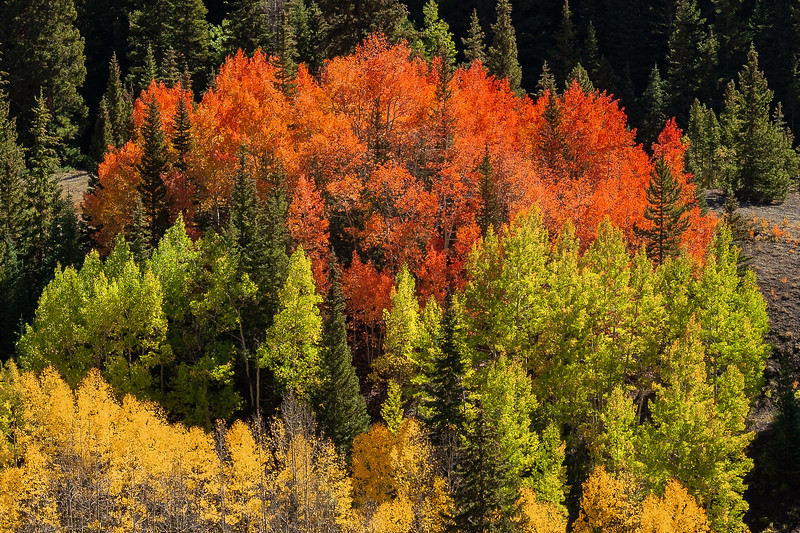 Layered Colors in The Colorado Rocky Mountains