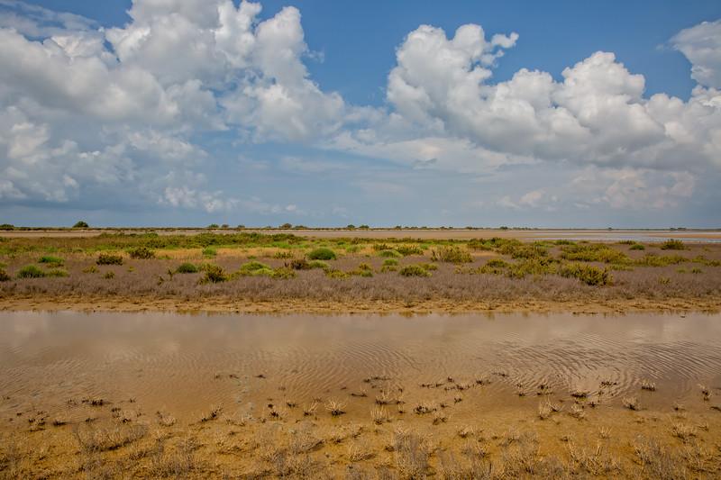 Regional Natural Park of Camargue