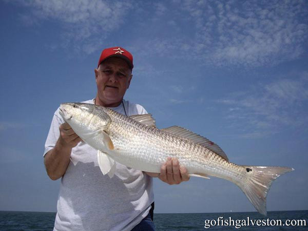 Mr Mike Weible  with his  36 inch redfish