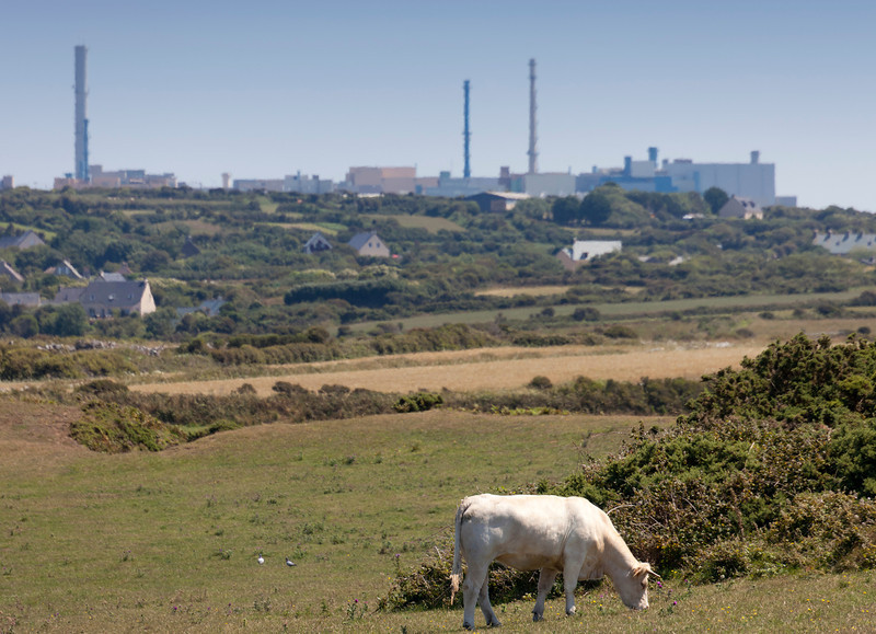 Cow in front of nuclear fuel reprocessing plant La Hague - Contrast between rural scene and environmental damage in La Hague, Basse Normandy, France
