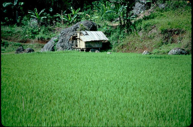Indonesia1_096.jpg
