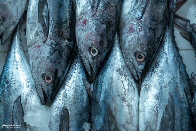 DSC04833- fish market - Muscat.jpg