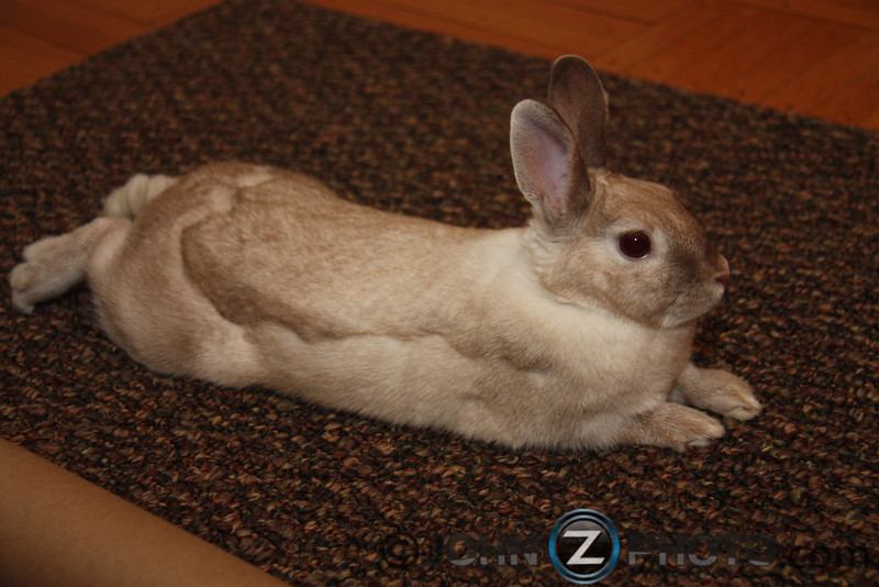 Our Easter Bunny 2011