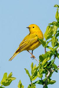 May 30, 2021 - Spring Birds