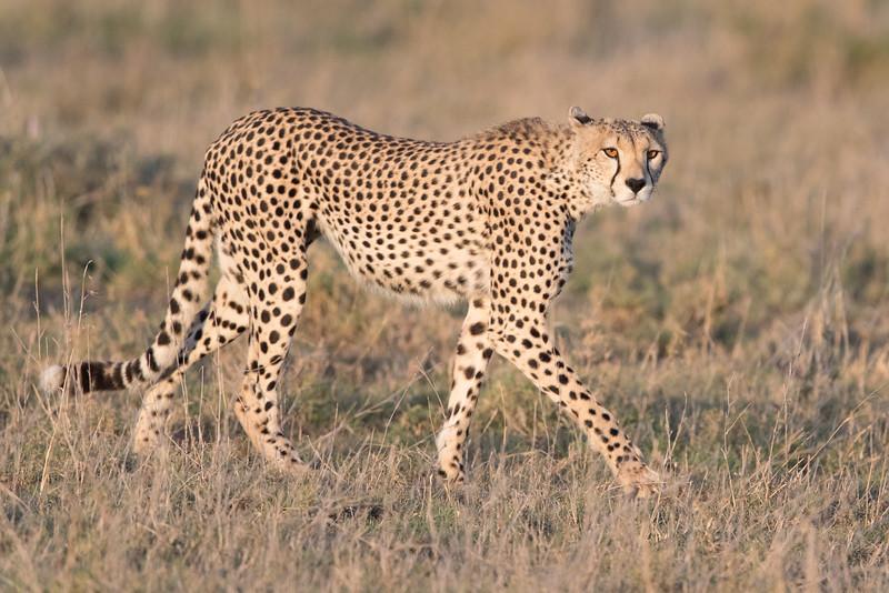 Africa - 101616 - 5902.jpg
