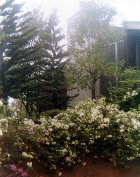 121183-ALB-1977-2-175.jpg