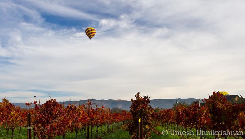 Napa Hot Air Balloon 041.jpg