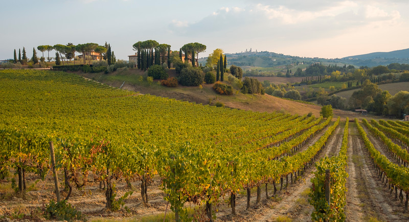 Winery near San Gimignano, Tuscany, Italy
