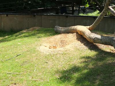 Angelo National Zoo and National Shrine  2014