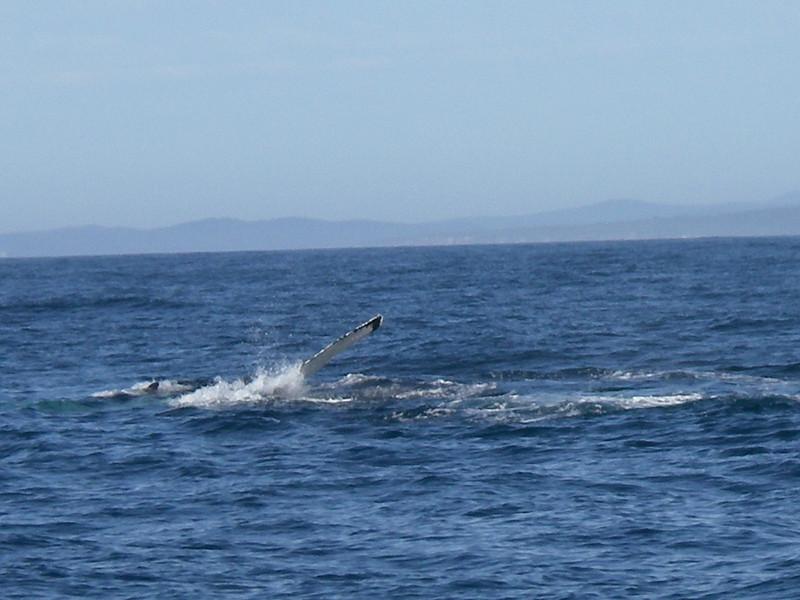 Sydney trip and Mirimbula 075.JPG