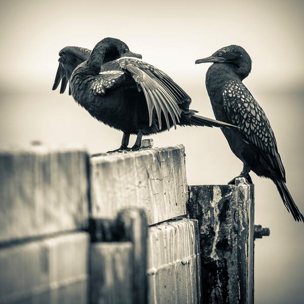 030319 birds _5.JPG