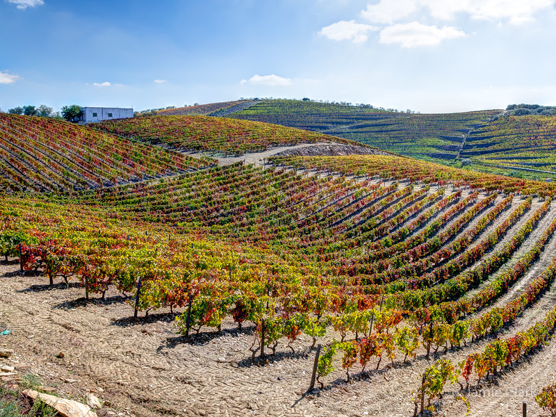 The Douro Valley, Portugal - October 2015