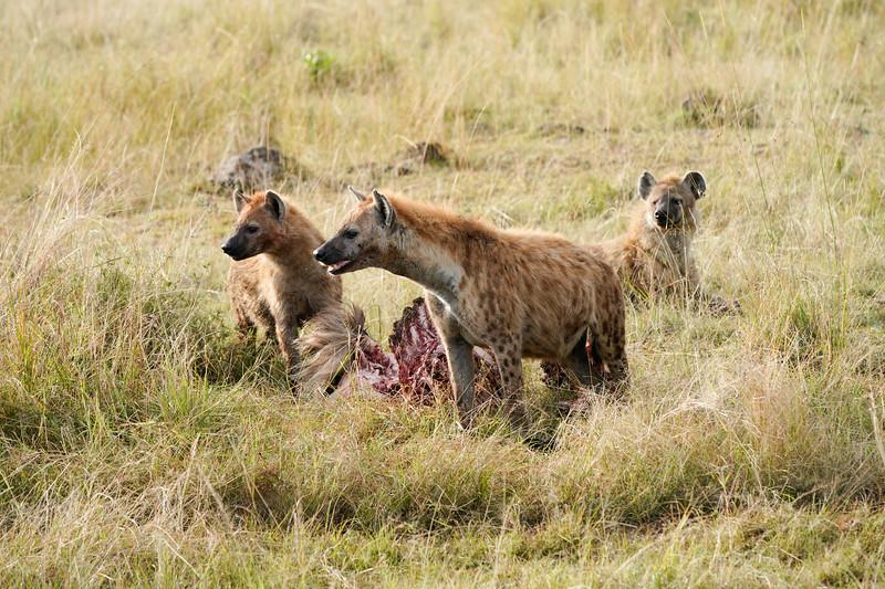 safari-2018-94.jpg