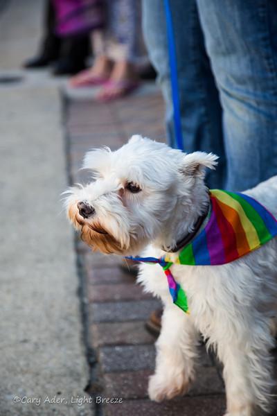 2013LGBT_Pride (59).jpg